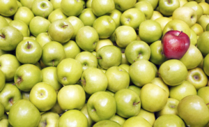 A red apple in a pile of green apples standing out